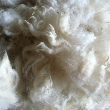 Alpaca Fleece - Carlyle 1 oz