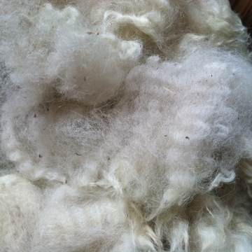 Alpaca Fleece - Carlyle whole fleece