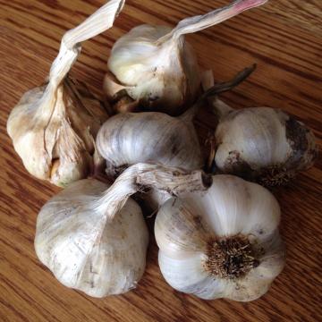 Garlic - 4 varieties