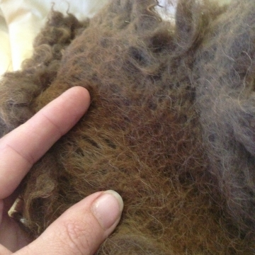 Buffalo Wool - Raw 1 oz