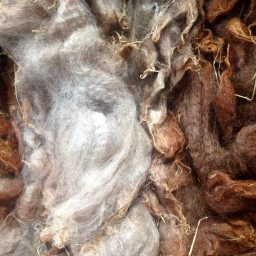 Alpaca Fleece - Bonnie, Cria 1 Oz