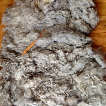 Alpaca Fleece - Toby 1 Oz
